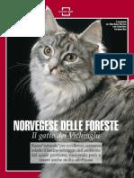 Articolo Gatto Norvegese delle foreste
