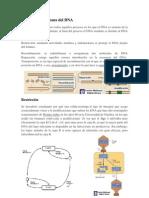 Biología molecular avanzada II