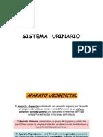 IB Sistema urinario