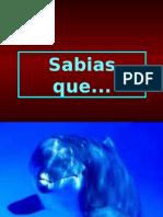 sabiasque_1_