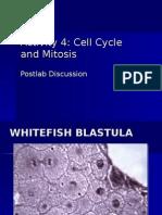 Activity 4 Mitosis Postlab