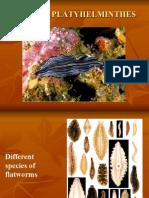 Activity 18_postlab Phylum Platy Helm Int Hes