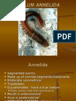 Activity 20_ Ppt Phylum ANNELIDA