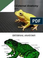 Activity 7 Postlab Frog External Ana