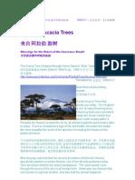 来自阿拉伯胶树:回归有意识呼吸的祝福 2005-9-1