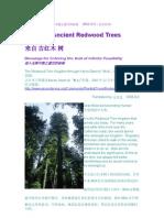 来自古红木:进入无限可能之虚空的祝福   2004-12-5(无名氏译)