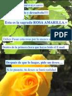 Rosa a Mar Ill A