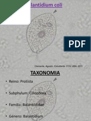 diphyllobothriasis taxonómia
