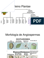 Exomorfolog A