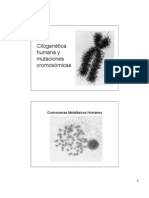 Citogenética Humana 2006