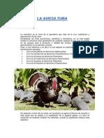 La Avicultura
