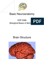 Basic+Neuroanatomypart1[1]