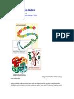 Struktur Molekul Protein