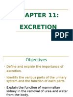 Chapter 11 - Excretion