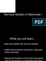 Chapter 13 - Nervous System in Mammals I