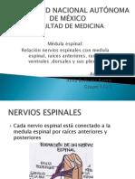 nervios_espinales