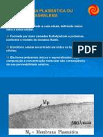 Membrana Plasmática Especializações