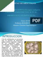 CULTIVO de OCTOPUS (Octopus Vulgaris, Cuvier