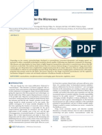 s Under the Microscope