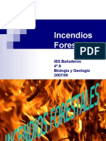 Incendios Forest Ales