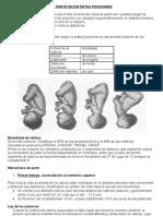 Obstetricia - El Parto en Distintas Posiciones1