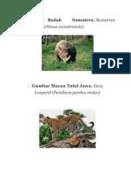 Gambar Badak Sumatera