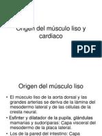Origen del músculo liso y cardiaco