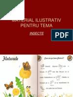 Material Ilustrat Pentru Tema Insecte 11