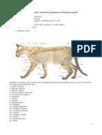 Anatomia pisicii