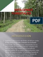 PLANTACIONES FORESTALES