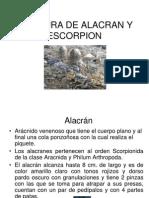 Picadura+de+Alacran+y+Escorpion