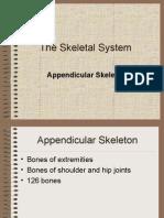 Appendicular Skeleton