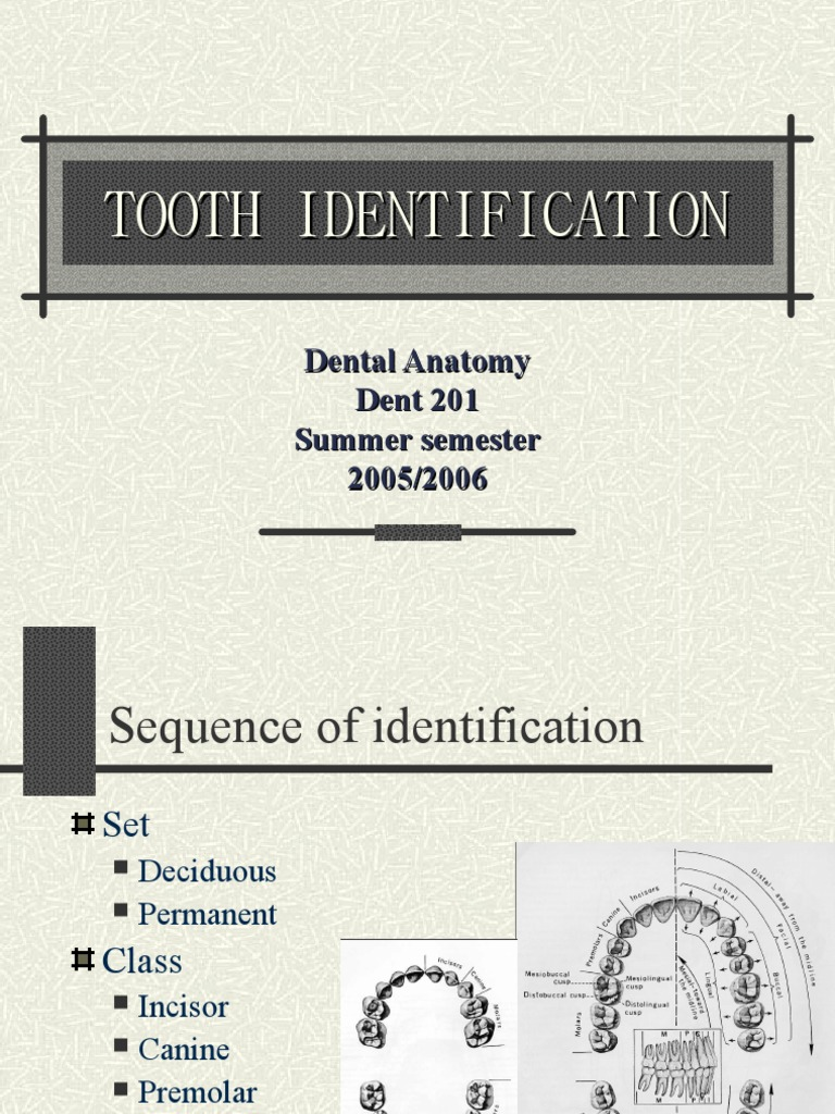 Tooth Identification | Mouth | Dentistry Branches