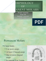 Morphology of Molars