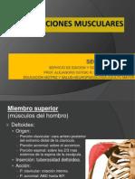 inserciones_musculares[2]