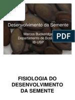 Desenvolvimento da semente