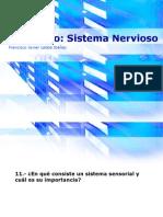Seminario - Sistema Sensorial