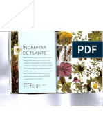 inmultirea plantelor ornamentale-4