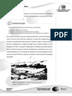 TeoGeneSis_F01