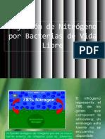 Fijación de Nitrógeno por Bacterias de Vida Libre