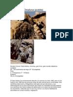 Gato Andino Peru