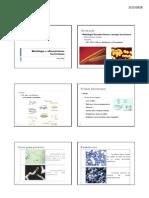 Morfologia e Ultraestrutura Bacterianas