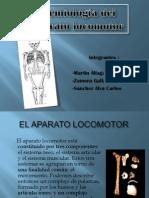 Aparato_locomotor[1]