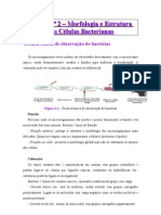 AULA 2 Sebenta de Bactereologia