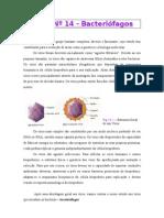 AULA 14 Sebenta de Bactereologia