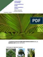 Palm A