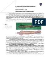 Guia Potencial de Accion y Neurotransmisores