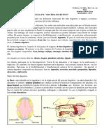 Guia n3 Sistema Digestivo