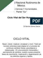 Ciclo Vital 1