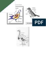 Sistem Pencernaan Pada Burung